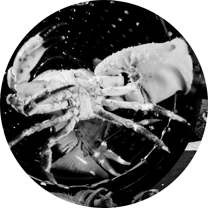 Black and white image. A crab being grabbed from a pot.